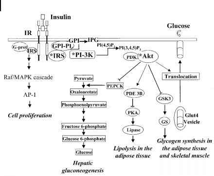 ORF cDNA Clone Publications
