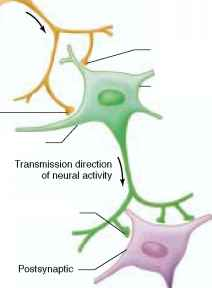 Nerve Cell Function
