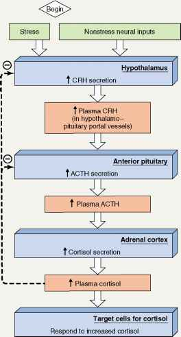 Crh Acth Cortisol Sequence