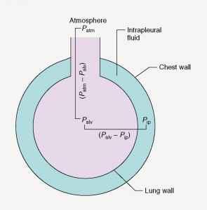 ventilation lungs