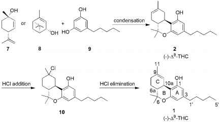 Organic Synthesis Thc