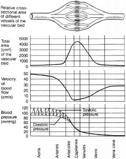 Blood Flow And Blood Pressure