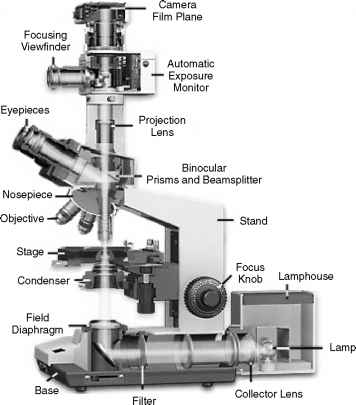 Basic Components Modern Microscope