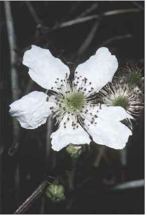 3309_103_229-crawling-flowering-plants Crawling Houseplants on