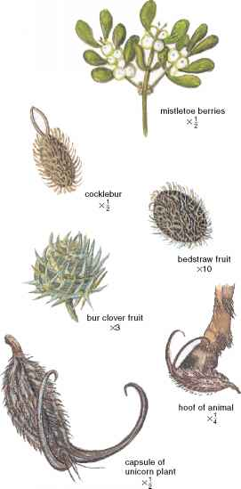 Fruits Seed Dispersal Animals