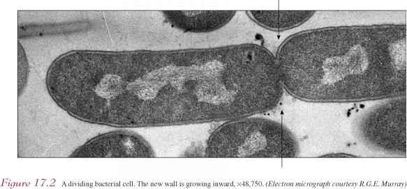Prokaryotic Cells - Flowering Plants - 78 Steps Health Journal