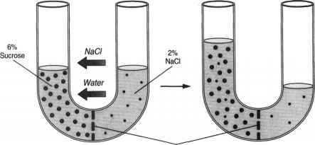 Selectively Permeable Membranes Salt