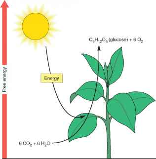 Photosynthesis reaction endergonic turner thesis main idea