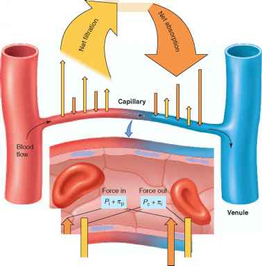 Forces Acting Capillary