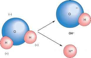 Ionic Compound Model Ionic Bonds - Human Ph...