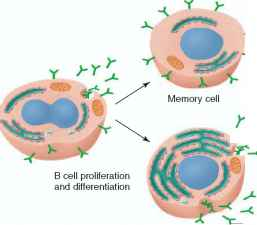 Activated Cell