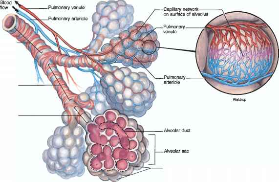 Blood Gas Measurements - Human Physiology - 78 Steps Health Journal