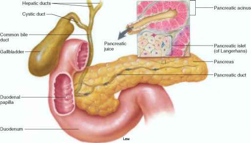 Pancreas Secretion Pancreatic Juice