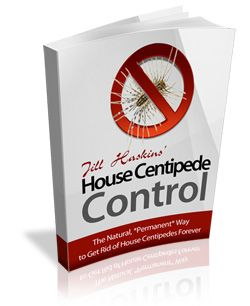 how to get rid of house centipedes in basement