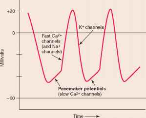 Ectopic Pacemaker Activity