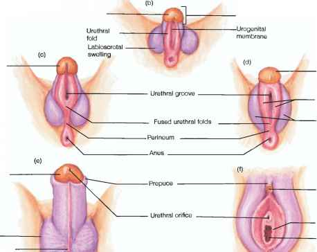 Labia Majora And Labia Minora Disease