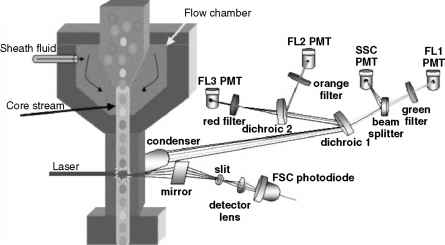 Flow Cytometry Theory
