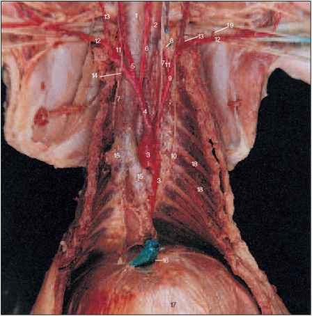 Cat Lymphatic Dissection