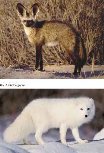 Animals Hot And Cold Climates