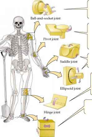 Knee Joint Almost Bone Bone