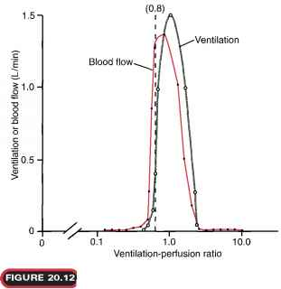 Ventilation Blood Flow
