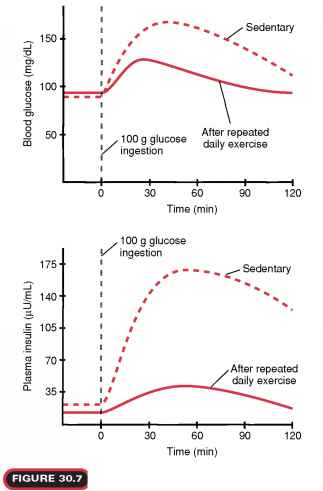 Insulin Exercise Response
