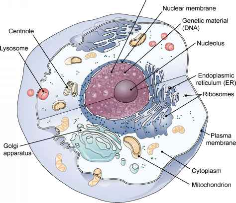 Animal Cell Medical Terminology