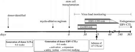 Epstein Barr Virus Infection Timeline