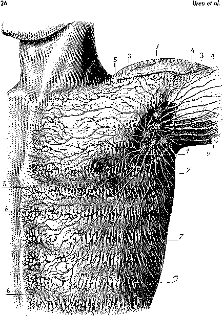 Lymph Node Map