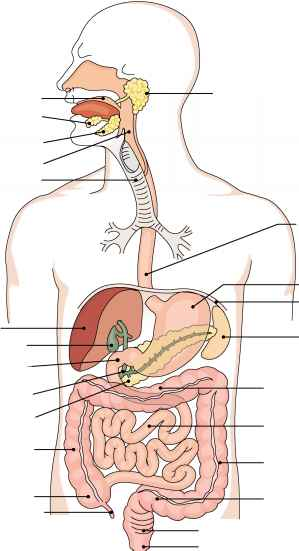 Label Digestion Diagram