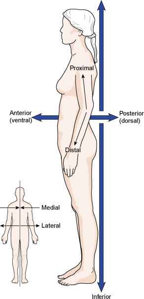 Directional Terms - Medical Terminology