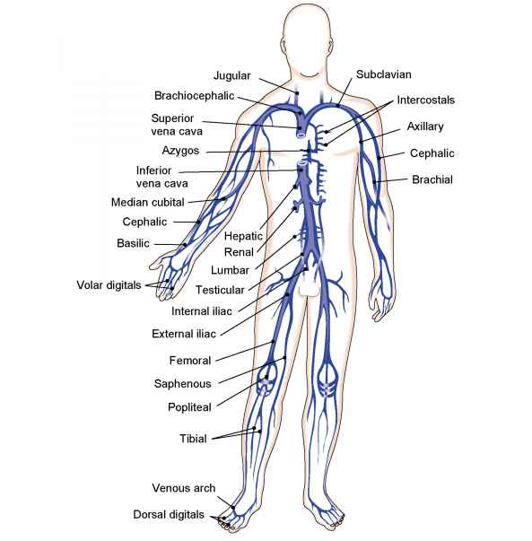 Path Lymph Through Body