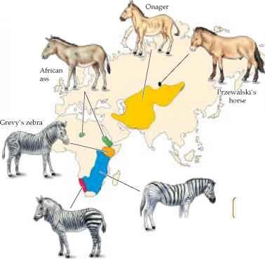 (PDF) Biogeography - ResearchGate