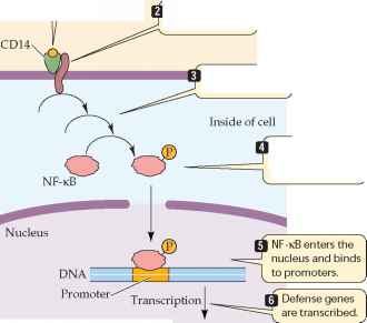 Plasma Membrane Features