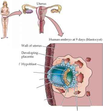 Neurulation Initiating the Nervous System - Plasma Membrane