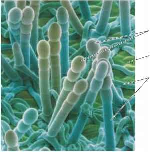 Diversity In The Kingdom Fungi Plasma Membrane