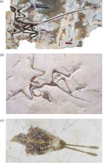 Oldest Bird Fossil