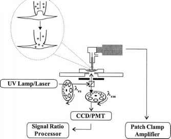Patch Clamping Biochip