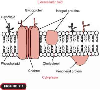 Integral protein diagram