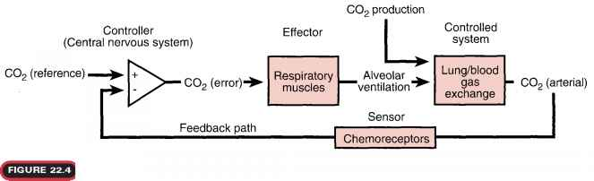 Mechanisms Pulmonary Ventilation