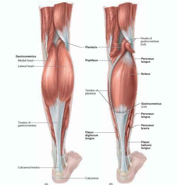 Posterior Superior Iliac Spine - Temporal Bone
